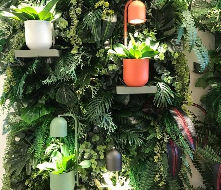 Fragment zielonej ściany z roślin z wkomponowanymi półkami i stojącymi na nich kolorowymi lampkami